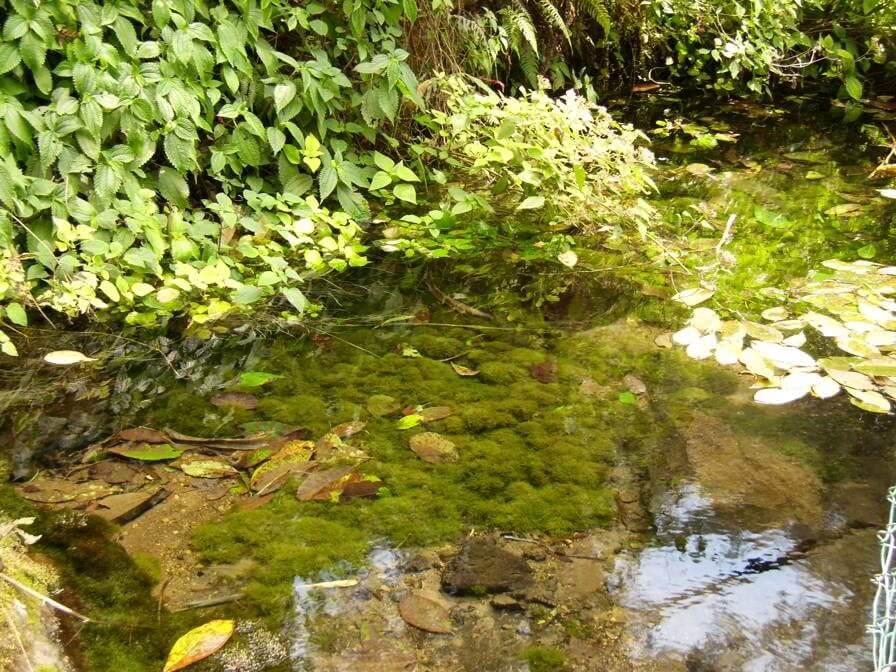 Nacimientos del río de los berros